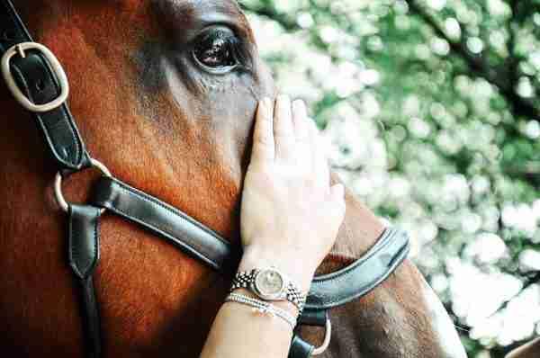 Luxe Equine Bracelets